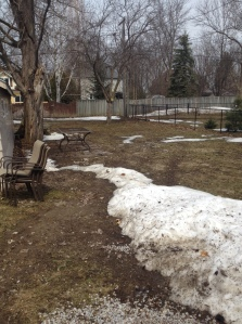Our backyard, 85% snow free!