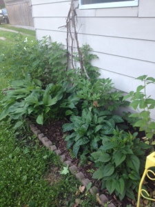 I've added some trumpet vines and bee balm to this garden bed