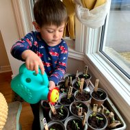 Arthur, watering seedlings.