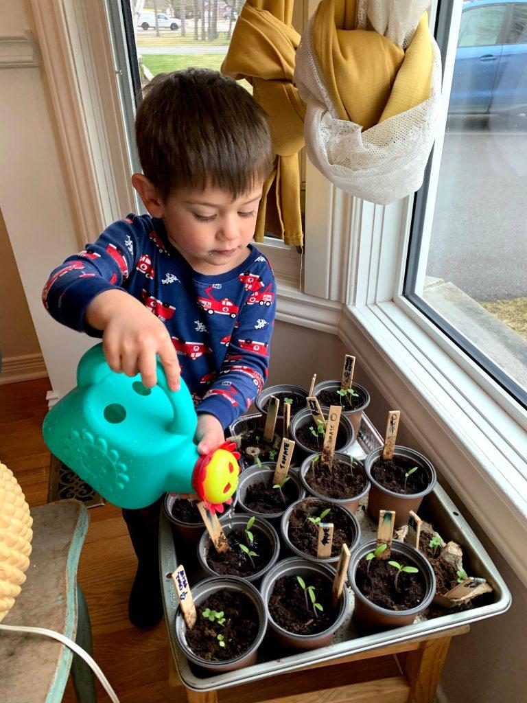 Arthur, watering seedlings.