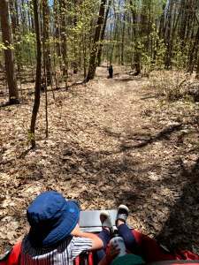 Two kids in a stroller, with a trail and dog ahead of them, in the woods.